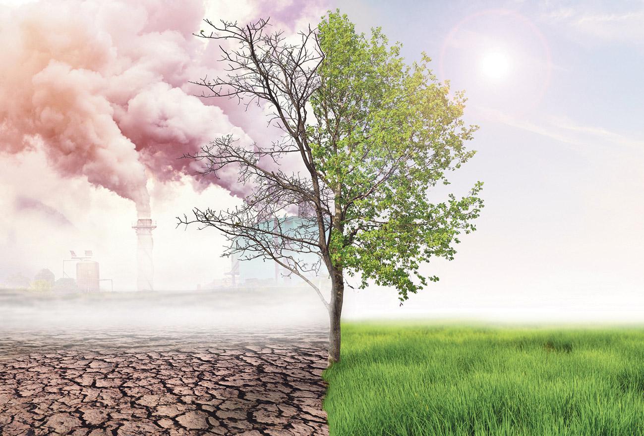 Ein Baum, dessen eine Hälfte grün und gesund erstrahlt, während die andere kahl und ungesund erscheint.