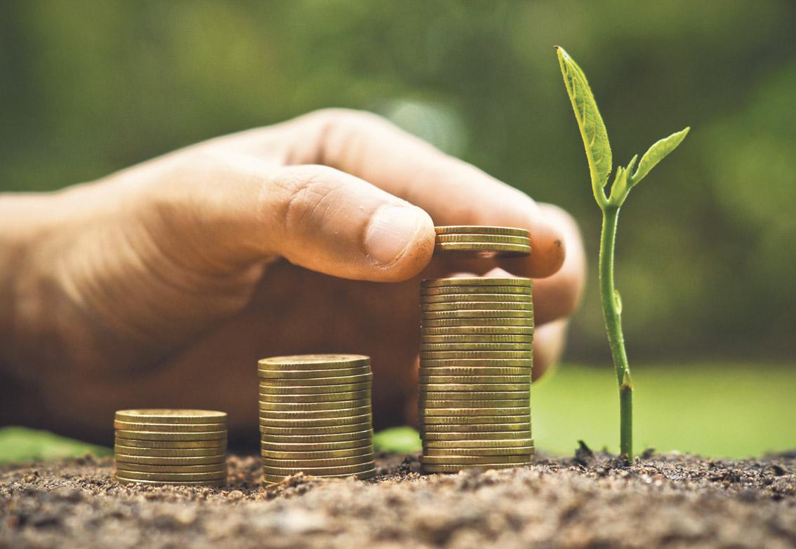 Hand stapelt Münzen in Säulen neben einem Pflanzensprößling