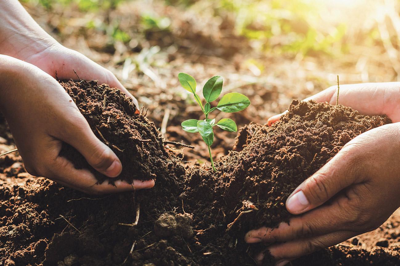 Hände pflanzen eine Blume ein.