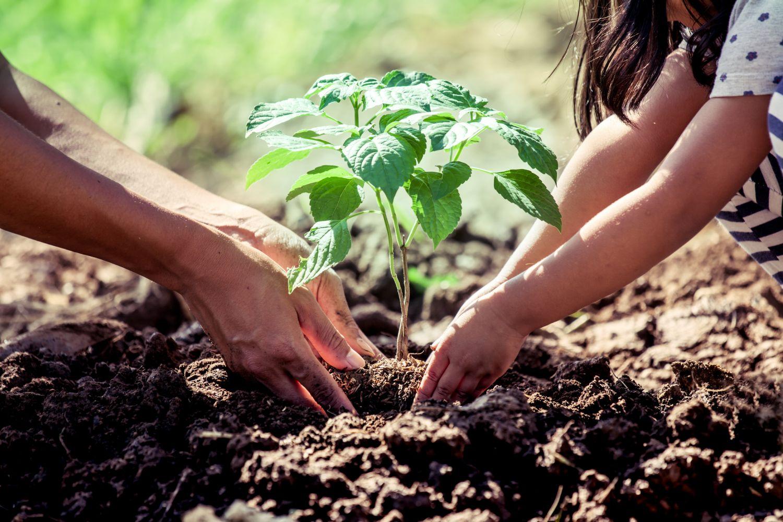 Ein Erwachsener und ein Kind pflanzen eine Pflanze